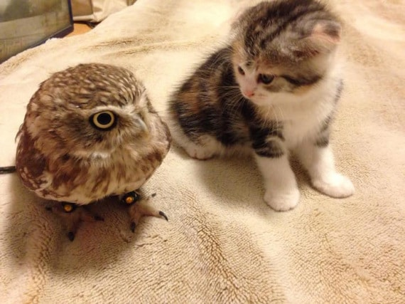 l'amicizia tra un gufo e un gatto