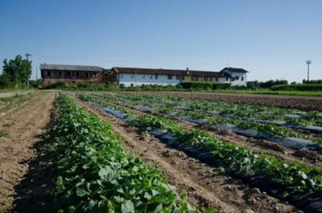 Un fertilizzante dagli scarti l 39 economia circolare for Un fertilizzante