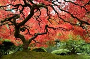 alberi, piante, foreste, giardini, botanica, riscaldamento globale, cambiamenti climatici, vegetazio