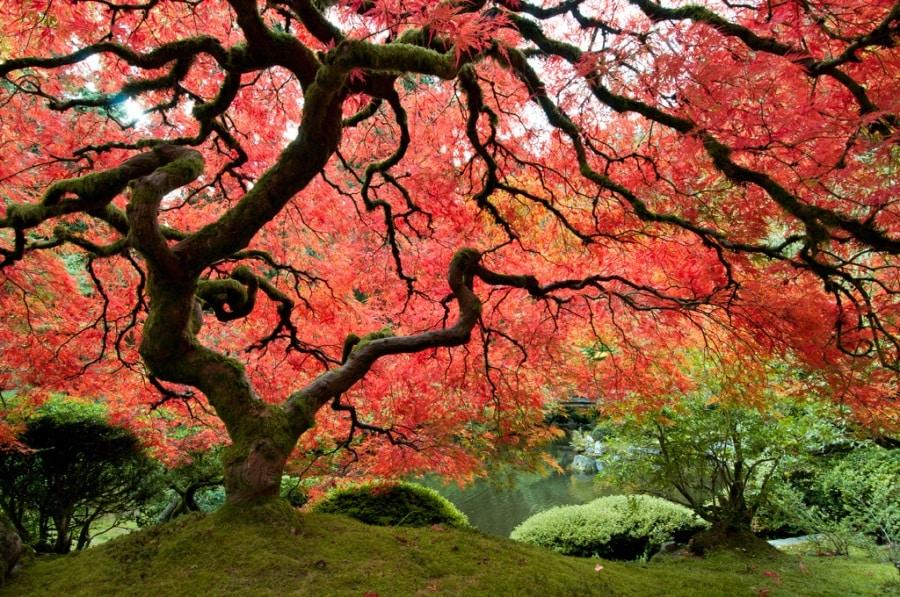Risultati immagini per alberi