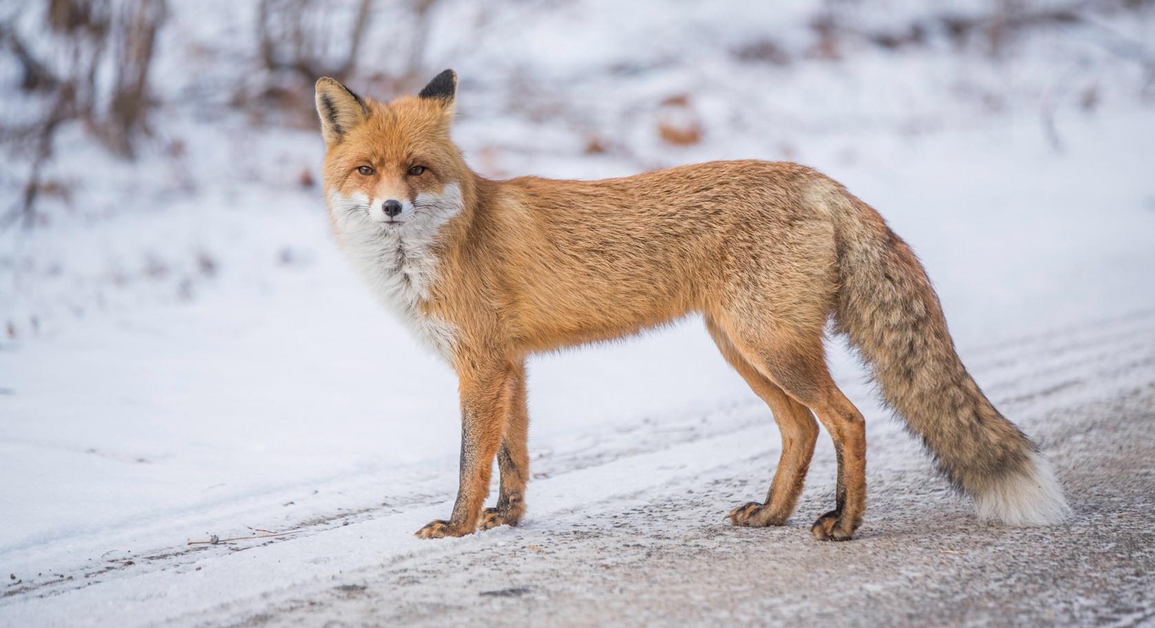 Matrimonio Tra Uomo E Animale : La vita animale prospera attorno a chernobyl focus