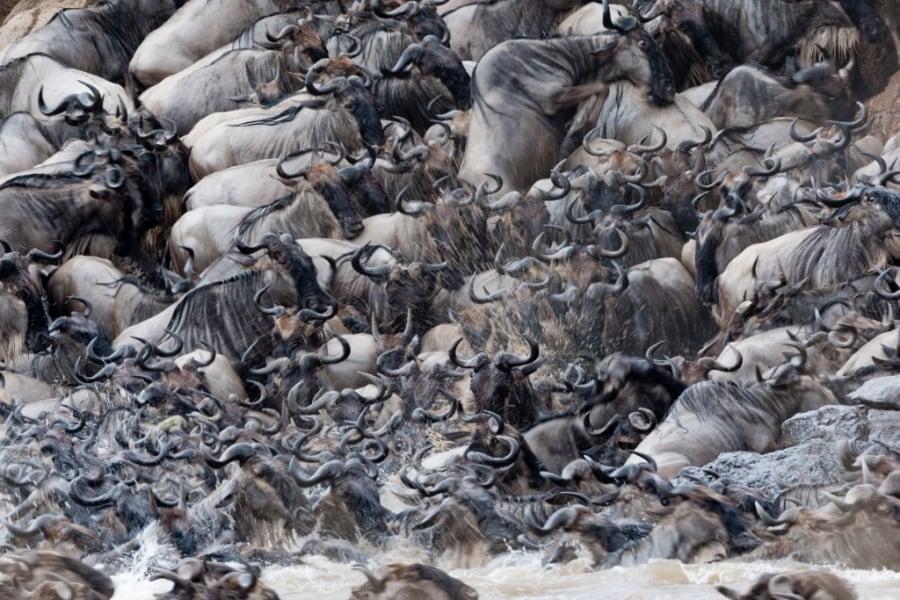 Ipnotiche foto di colonie animali