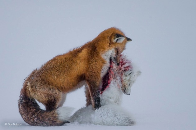 Wildlife Photographer of the Year, i vincitori
