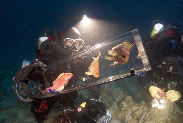 100 nuove specie nelle acque delle Filippine