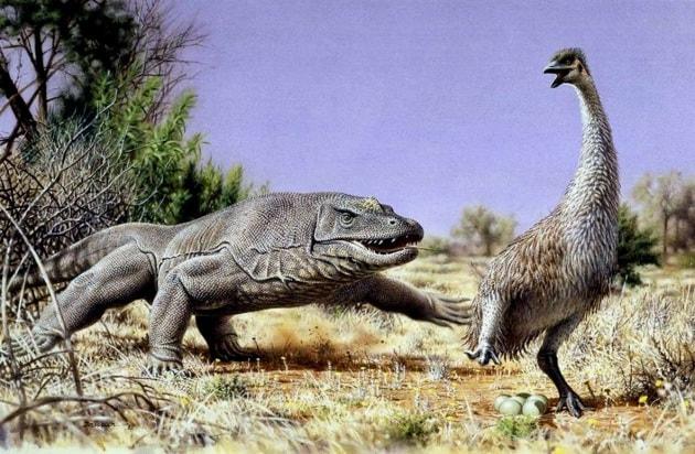 megafauna