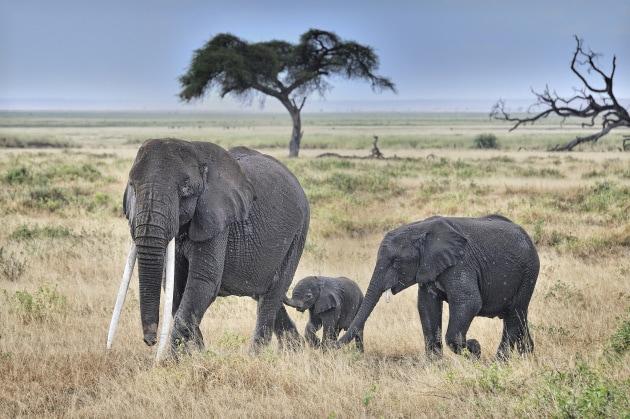 Il mondo senza l'uomo: un grande Serengeti