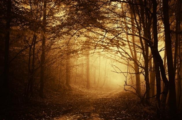 foresta-decidua