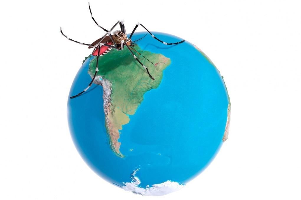 Zika, come fa il virus a sopravvivere all'inverno?