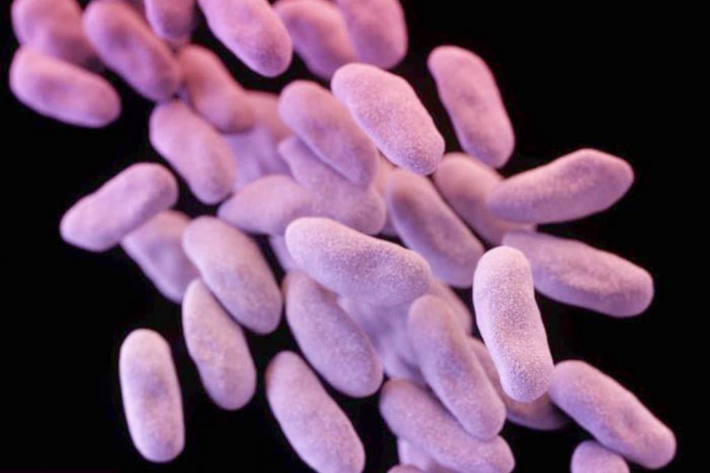 Negli USA il primo super batterio resistente a tutti gli antibiotici