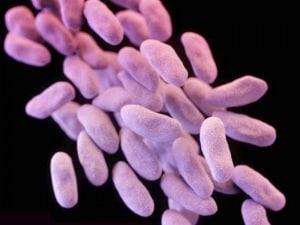 batteri, resistenza agli antibiotici, nuovi antibiotici, staffilococco