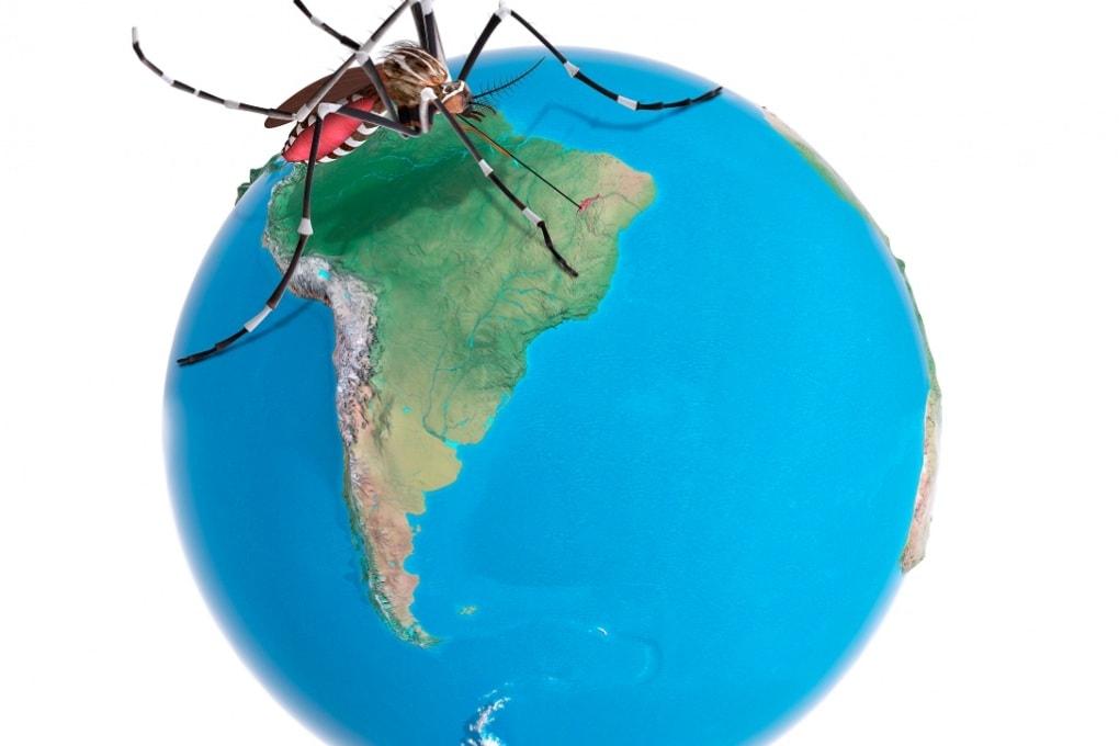 Il virus Dengue spiana la strada a Zika