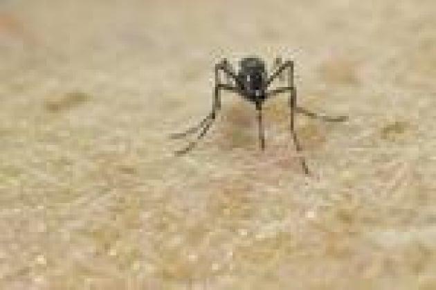 Zika può trasmettersi anche con le lacrime