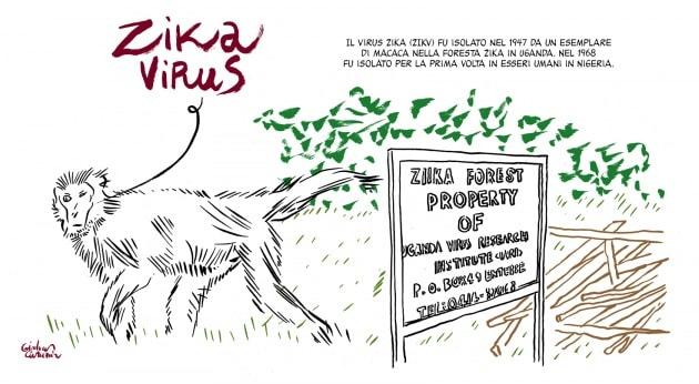 Zika: 12 quadri per raccontare il virus, dalla scoperta a oggi