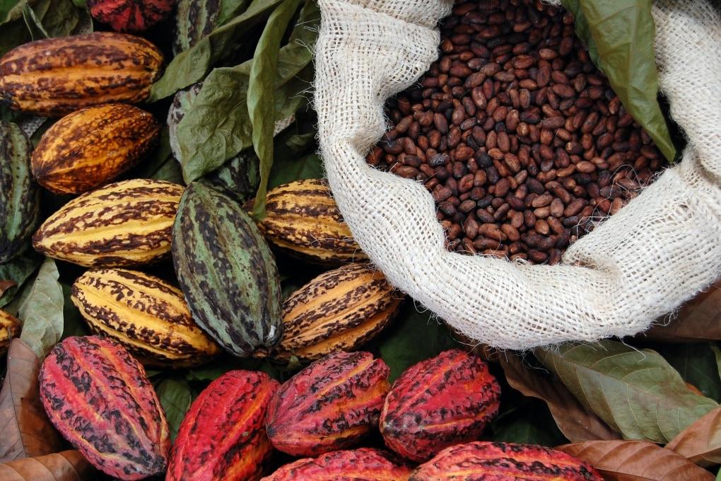 Dal cacao al cioccolato