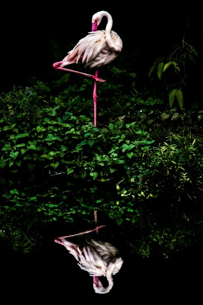 131002159521527581_steiner_wang_taiwan_shortlist_open_nature-and-wildlife_2016