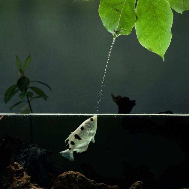 Il pesce che riconosce i volti umani (e ci sputa sopra)