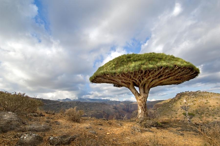 10 alberi alieni che crescono sulla terra for Chioma albero