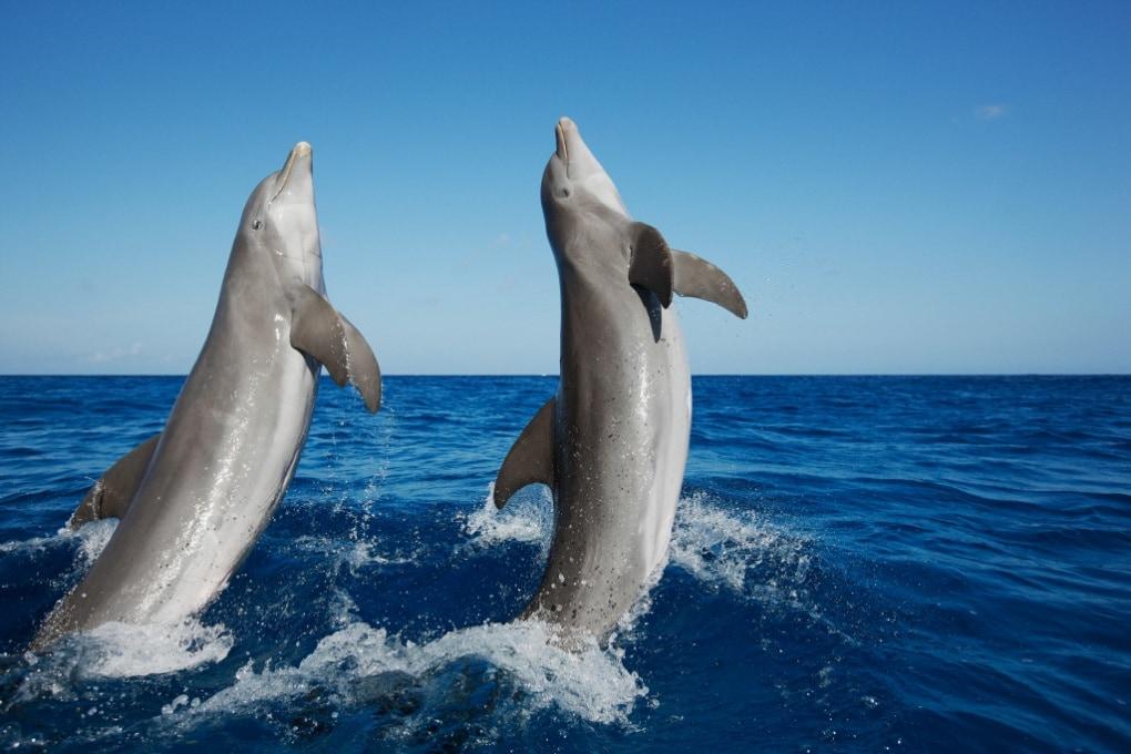 Le chiacchiere tra delfini per risolvere i problemi