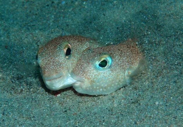 Le 10 nuove specie più bizzarre dell'anno