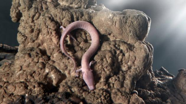 Proteo: profondità record per l'anfibio dei record