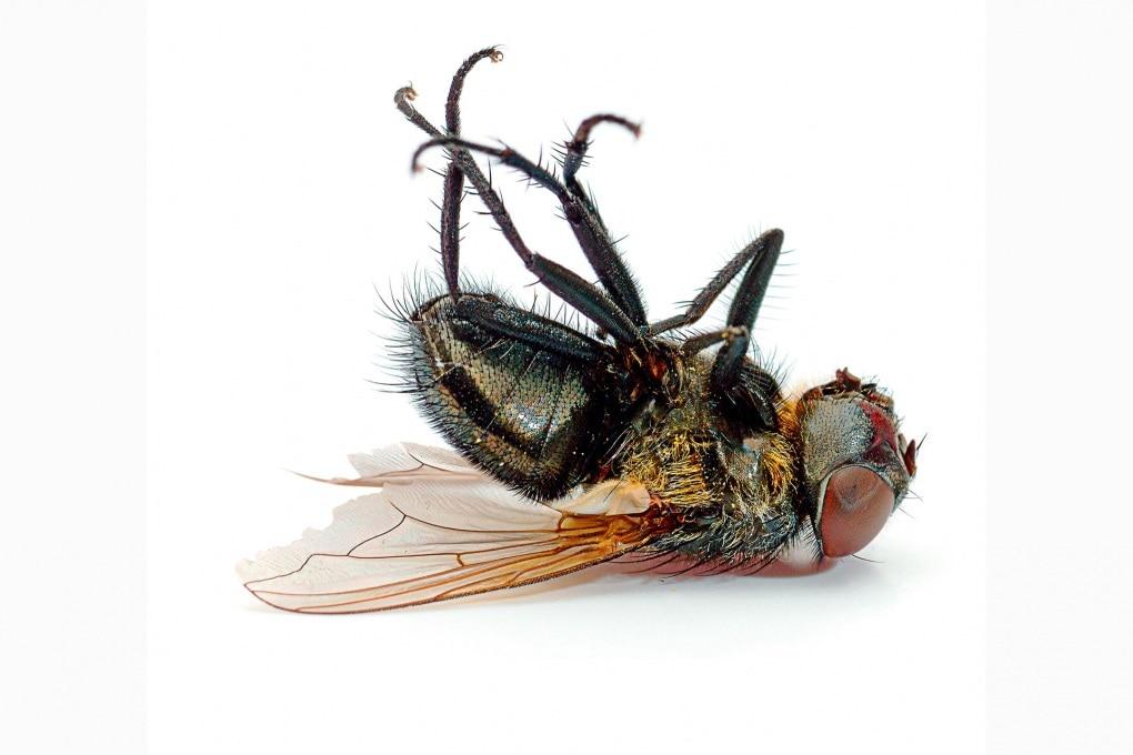 Perché è così difficile acchiappare una mosca?