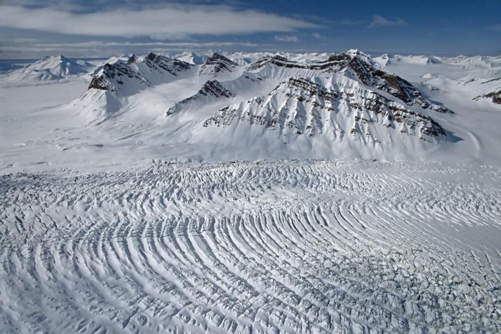La foresta tropicale delle Svalbard