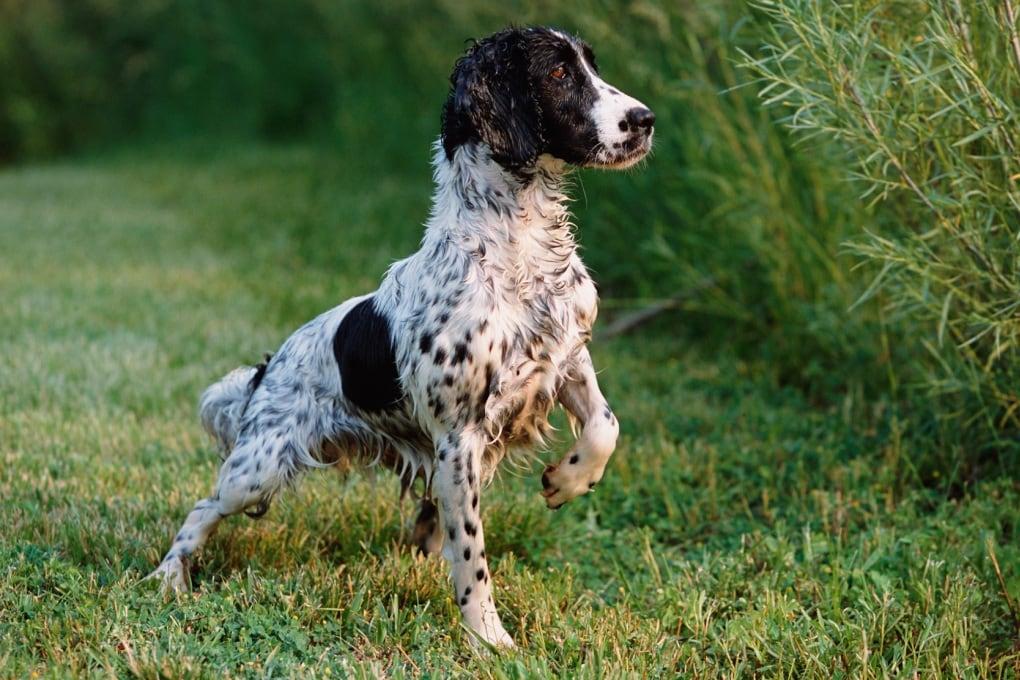 Perché i cani puzzano così tanto quando sono bagnati?