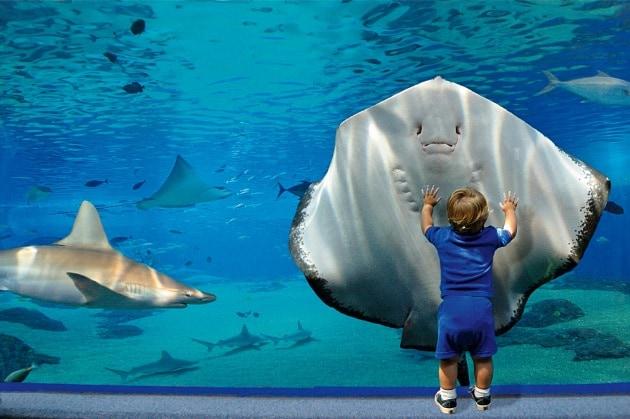 Un pesce nell acquario vede noi come noi vediamo lui for Acquario tartarughe e pesci insieme