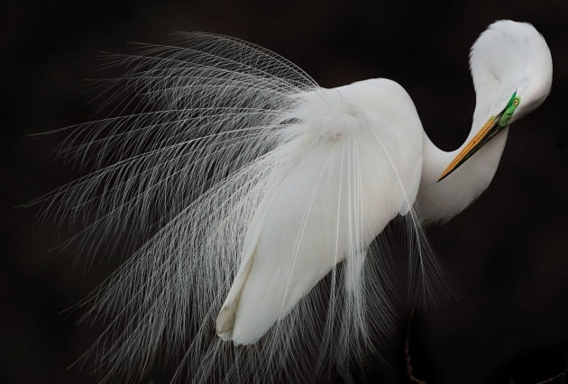 Audubon Photography Awards 2015: le più belle foto di uccelli
