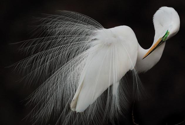 Audubon Photography Awards 2015: le più belle foto di uccelli
