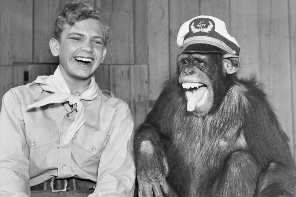Gli scimpanzé ridono in silenzio, come l'uomo
