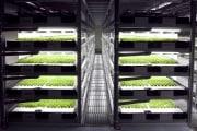 La lattuga coltivata dai robot