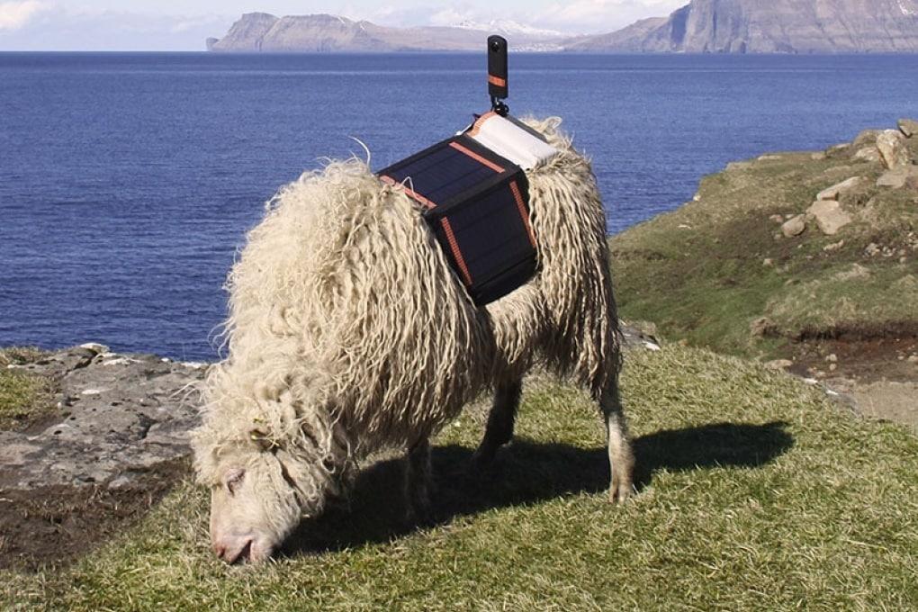 Sheep View: le Isole Faroe viste da una pecora