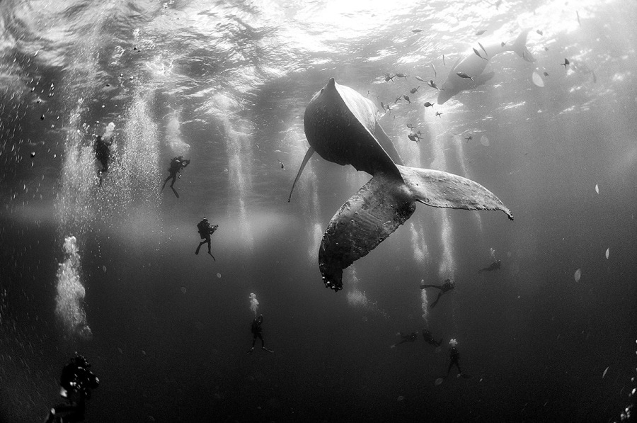 -anuarpatjanefloriuk-whalewhisperers-fbinsta