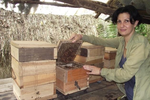 Vita con le api senza pungiglione