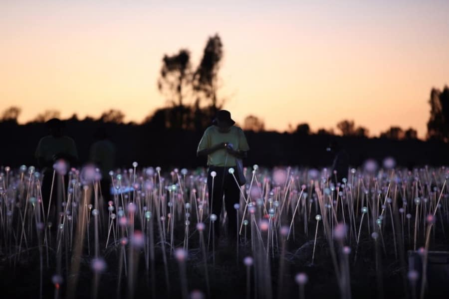 bruce-munro-field-of-light-uluru-9