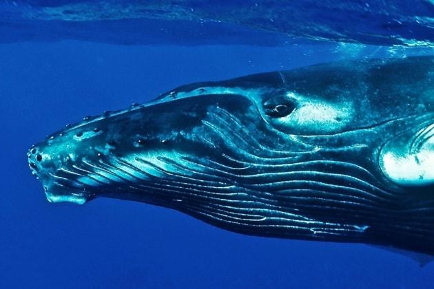 10 cose che forse non sapevi sui cetacei