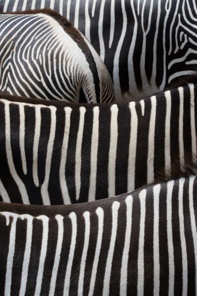 k6_08_armin_paul-proeyler-zebramuster