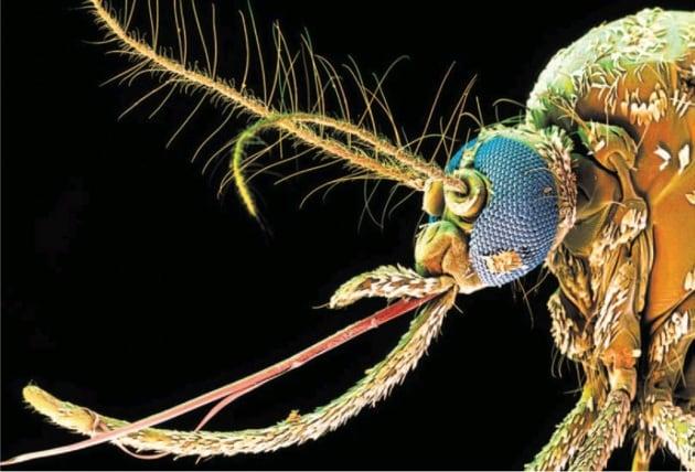 Virus Zika: ecco perché è emergenza sanitaria
