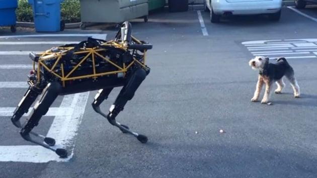 Cosmo contro Spot, animale contro robot