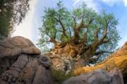 alberovita