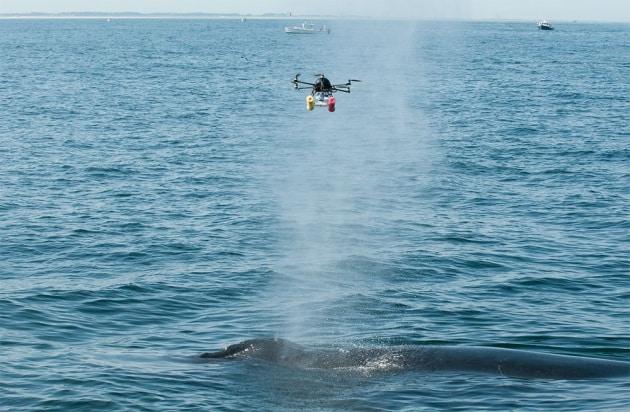 Droni per catturare il respiro delle balene