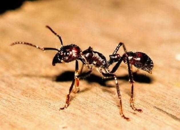 Formiche addio, si combattono a colpi di talco e aceto