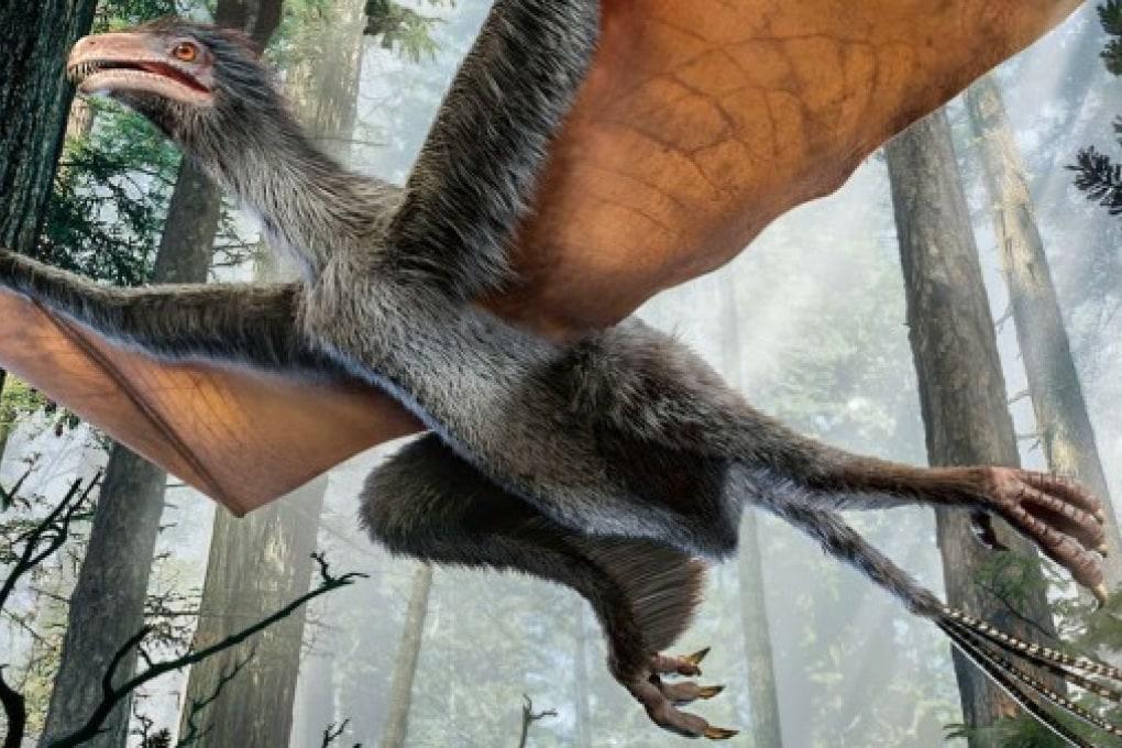 Il dinosauro che planava come un aliante