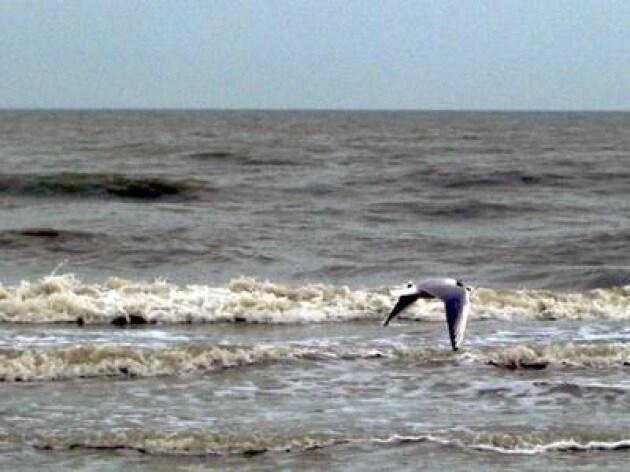 Spiagge italiane 714 rifiuti ogni 100 metri, Beach Litter 2016