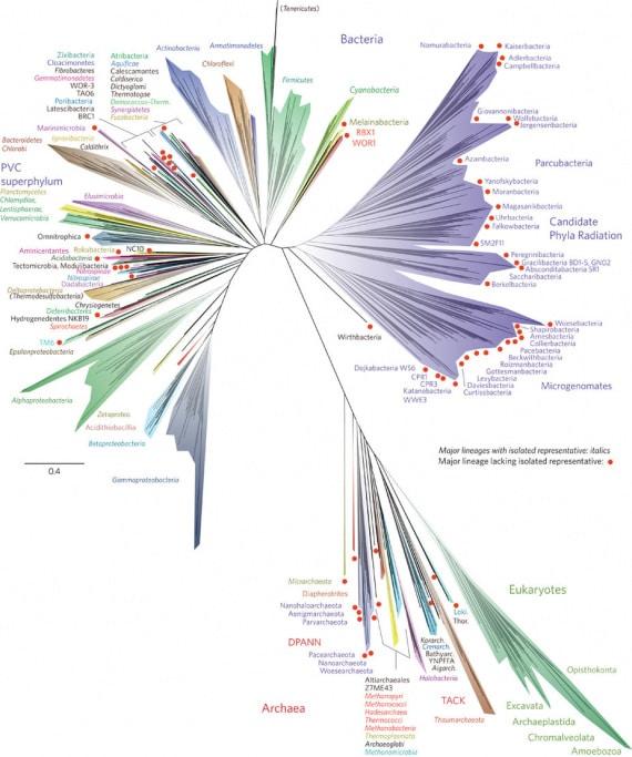 L'albero della vita sulla Terra