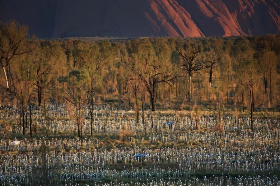 bruce-munro-field-of-light-uluru-12