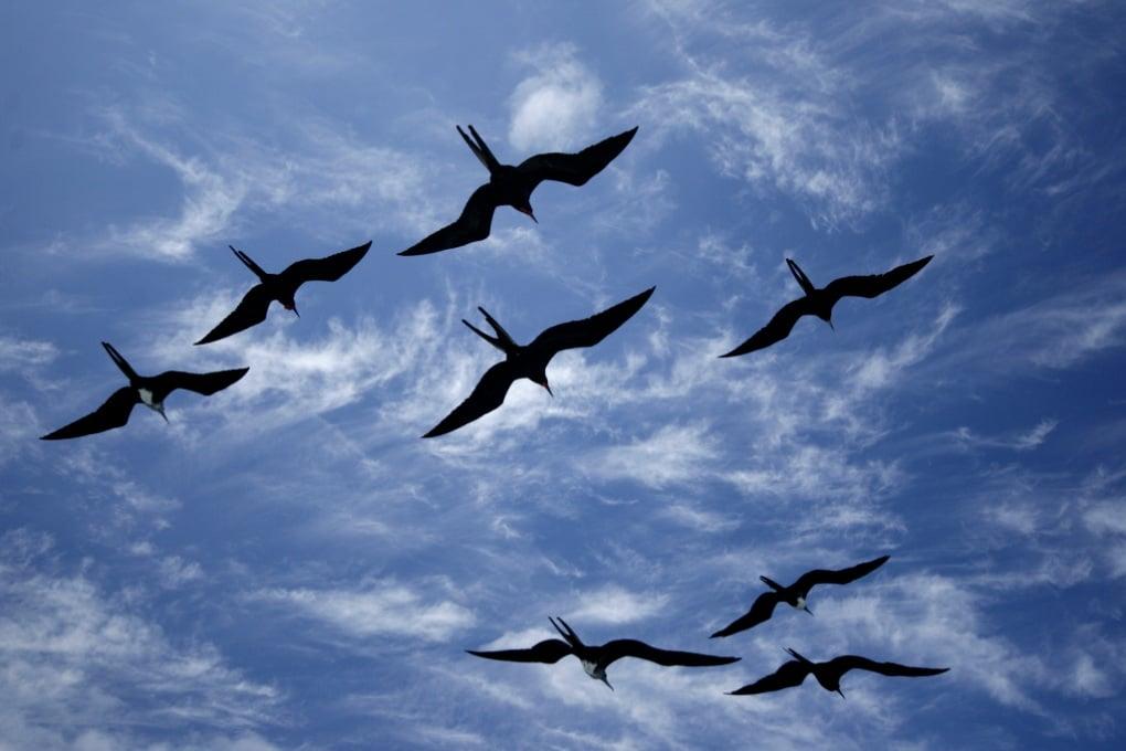 Gli uccelli dormono in volo?