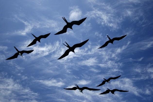 Stormo di uccelli su vercelli trailer del film - 3 part 6