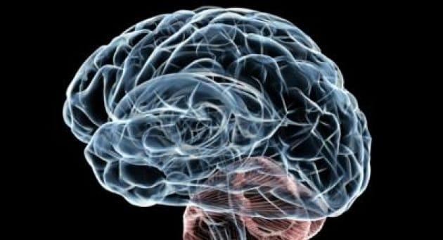 cervello_2